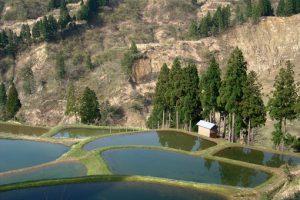 小林麻央 新潟を枝豆で思い出す!祖母の思い出の地 新潟の温泉に行くことはできるのか?2