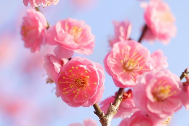 小林麻央 皮膚転移の余命は全身療法が鍵!花咲き乳がんに対して全身療法はどれほどの効果が見込めるのか88