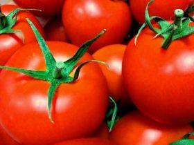 小林麻央 トマトとヨーグルトの内容は顎転移の痛みだった!食べれない厳しい現実が書かれているため内容の転載・引用はしないでほしい!999