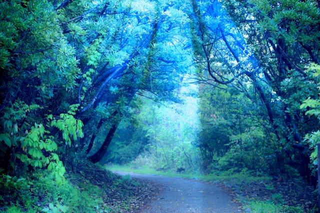 みたまうつしの儀とは通夜祭の後に行われる遷霊祭!儀式が行われるごとに、小林麻央の死去の実感が強くなっている・・・。5