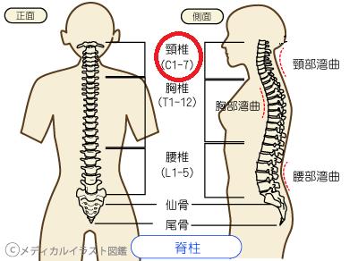 木原実 怪我の頸椎損傷を動画で解説!怪我からの復帰なるか?