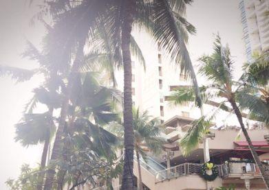小林麻耶 ハワイは11月の旅行でも市川海老蔵と一緒だった・・・