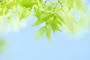 小林麻央 ブログ更新で海老蔵も更新した「6月9日。」海老蔵の本音が見えた気がする。