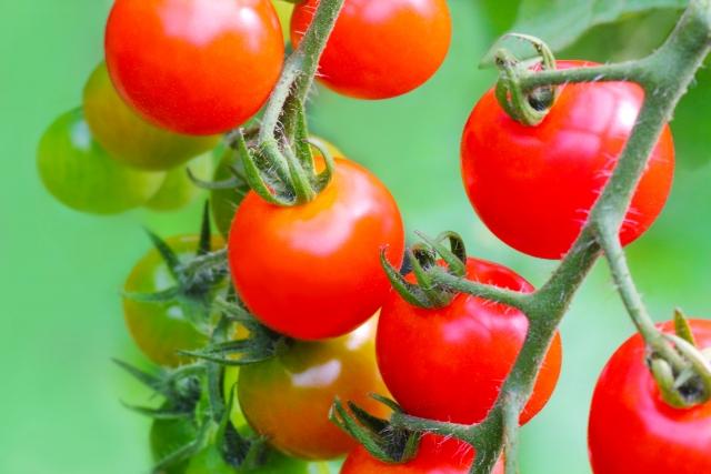 小林麻央 トマトとヨーグルト ネタバレより栄養と効果に注目!トマトは癌抑制に期待大!?