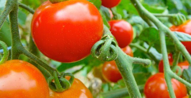 小林麻央 トマトとヨーグルトの内容は顎転移の痛みだった!食べれない厳しん現実が書かれているため内容の転載・引用はしないでほしい!